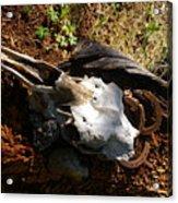 Skull And Horseshoes Acrylic Print
