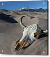 Skull At The Great Sand Dunes Acrylic Print
