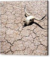 Skull In Desert 2 Acrylic Print