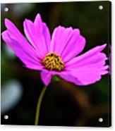 Sky Facing Flower Acrylic Print