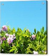 Sky Flower Acrylic Print