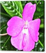 Sky Flower In Huntington Botanical Gardens In San Marino-california  Acrylic Print