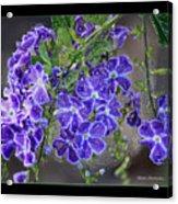 Sky Flower Window  Acrylic Print