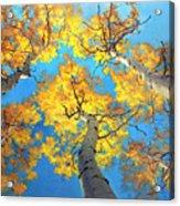 Sky High Aspen Trees Acrylic Print