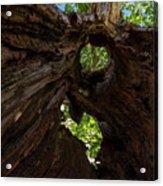 Sky View Through A Hollow Tree Trunk Acrylic Print
