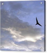 Sky16 Acrylic Print