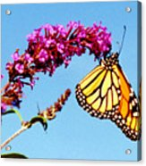Skylands Monarch Acrylic Print