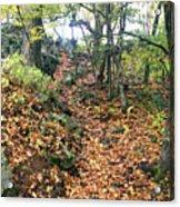 Skylands Path P Acrylic Print
