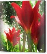 Skyward Red Lilies Acrylic Print