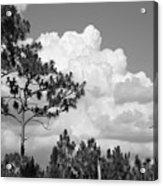 Slash Pine Forest Acrylic Print by Steven Scott