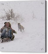 Sled Before The Dogs? Acrylic Print