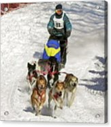 Sled Dogs In Action Acrylic Print