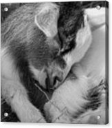 Sleeping Baby, Black And White Acrylic Print