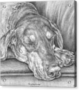 Sleeping Beauty - Doberman Pinscher Dog Art Print Acrylic Print by Kelli Swan