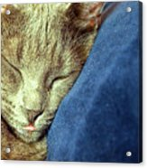 Sleeping Cat Acrylic Print