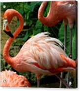 Sleeping Flamingo Acrylic Print