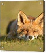 Sleeping Fox Kit Acrylic Print