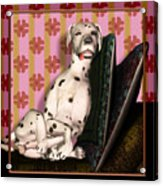 Sleeping IIi Acrylic Print