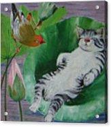 Sleeping Kitten Acrylic Print