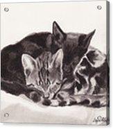 Sleeping Kittens Acrylic Print