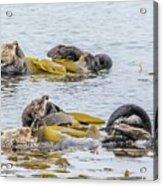 Sleeping Otters Acrylic Print