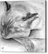 Sleeping Siamese Acrylic Print