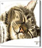 Sleeping Tabby Cat  Acrylic Print