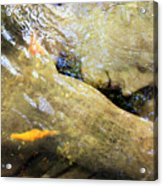 Sleeping Under The Water Acrylic Print