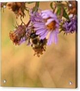 Sleepy Bee On New England Aster Vertical Acrylic Print