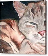 Sleepy Cat Acrylic Print
