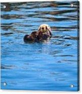 Sleepy Otter Acrylic Print