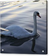 Sliting The Dream Acrylic Print