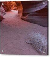 Slot Canyon Tumbleweed Acrylic Print