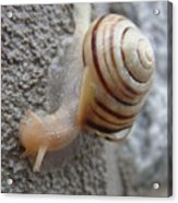 Slow And Steady Acrylic Print by Patricia M Shanahan