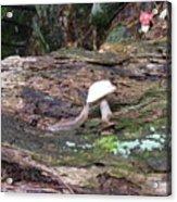 Slug And Mushroom Acrylic Print
