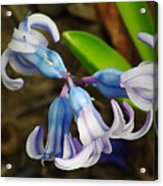 Small And Lovely Acrylic Print