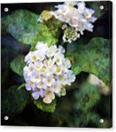 Small Blossoms 4948 Idp_2 Acrylic Print