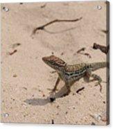 Small Brown Lizard Sitting On A White Sand Beach Acrylic Print