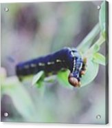 Small Bug Acrylic Print