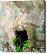Small Ferns Acrylic Print