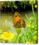Small Heath Butterfly Acrylic Print