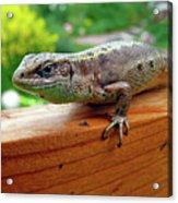 Small Lizard Acrylic Print