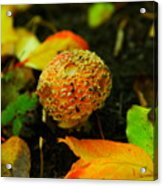 Small Mushroom In Autumn Acrylic Print