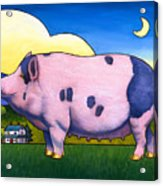 Small Pig Acrylic Print by Stacey Neumiller