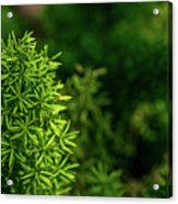 Small Plants Acrylic Print