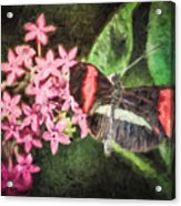 Small Postman - Pink Flower Burst Acrylic Print