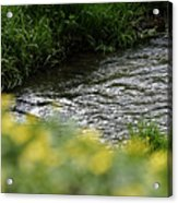 Small River With Shore Grass Acrylic Print