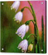 Small Signs Of Spring Acrylic Print