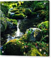 Small Stream In Green Forest Lapland Acrylic Print