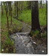 Small Stream In The Woods Acrylic Print